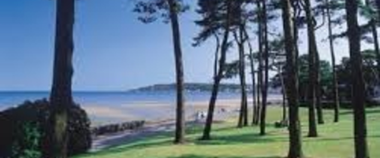 An image of some trees with Mumbles in the background