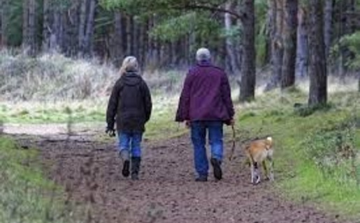 An image of two people and a dog walking through a forest