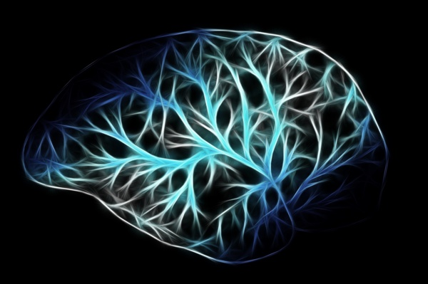 Brain shape with lit-up nerve structures