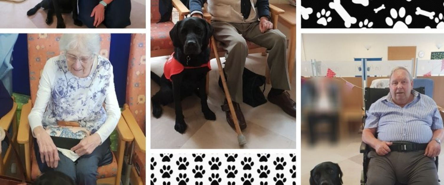 Patients enjoying pet therapy