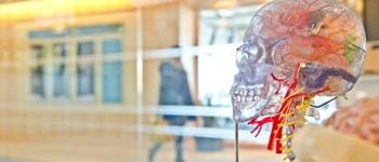 Model of a skull