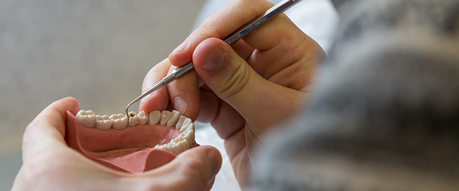 Fake lower dental arch