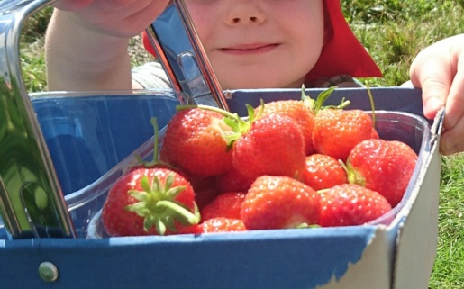 Child carrying strawberries